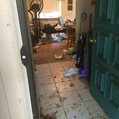 Arlington cat hoarder house entry before