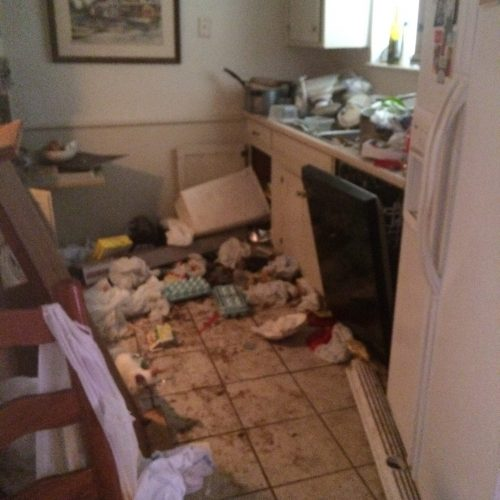 Arlington hoarder house kitchen before